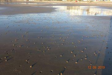 Lugworm Bay
