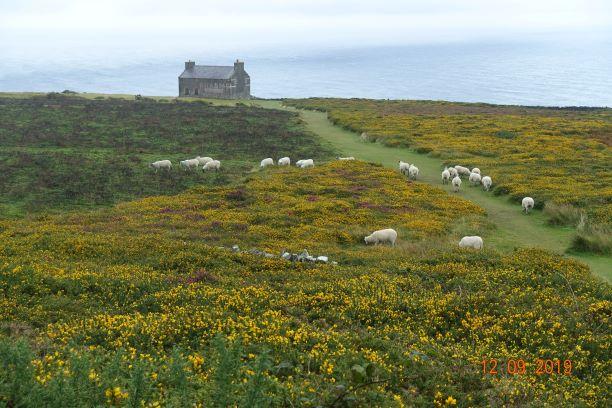Sheep stone circle