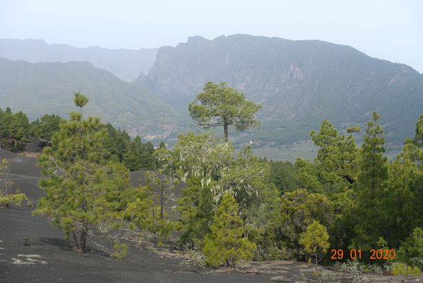 Lichen on trees and Punta de La Roques
